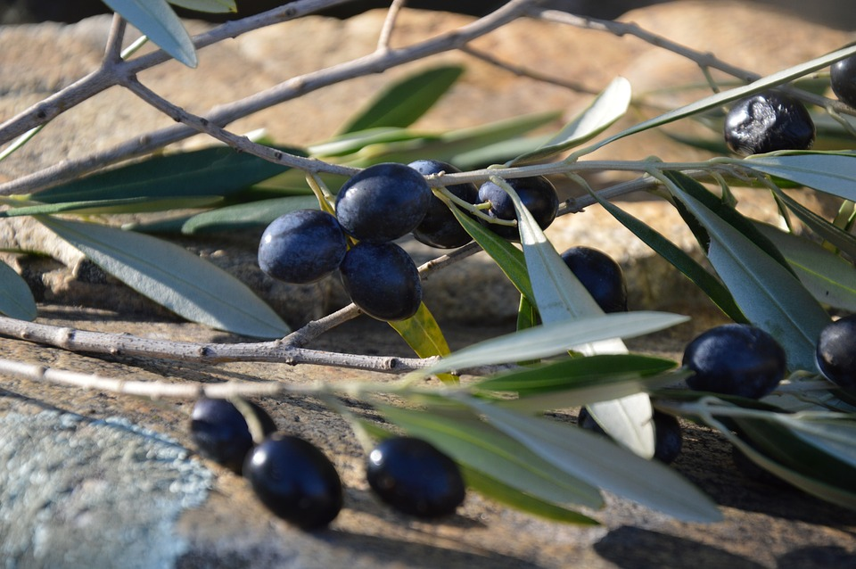 Оливки, Маслины Черные, Оливье