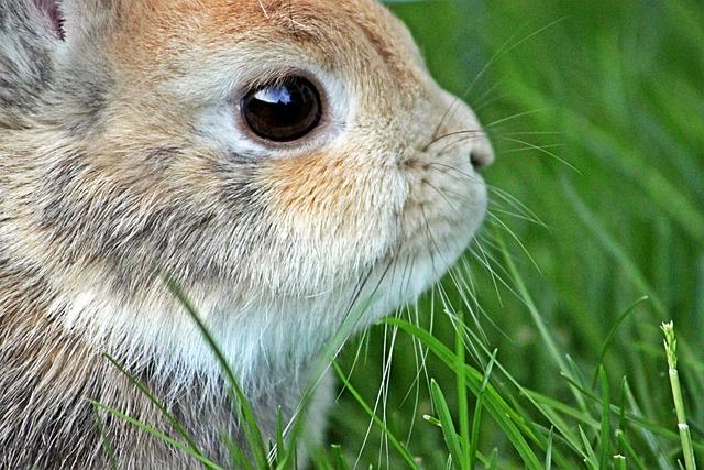 Dwarf Rabbit Easter · Free photo on Pixabay