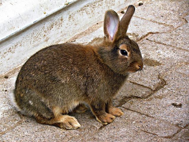 72fa1d2b Bunny Kanin Dyr - Gratis foto på Pixabay