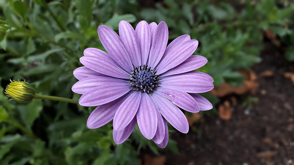 Fiori Color Viola.Fiori Fiore Colore Foto Gratis Su Pixabay