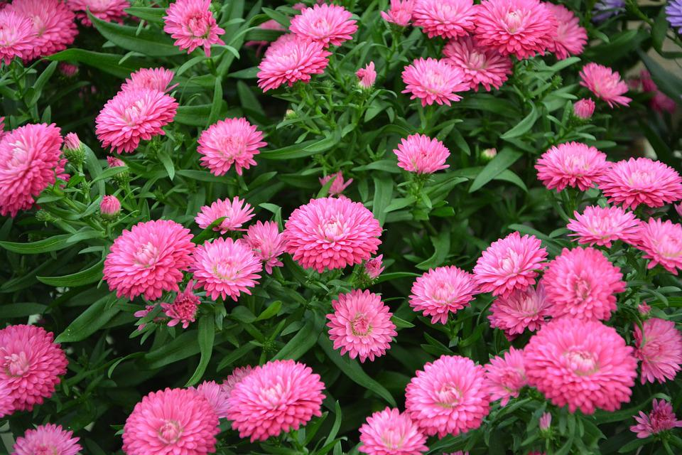 Flowers pink color free photo on pixabay flowers pink color pink pink flowers pink flower mightylinksfo