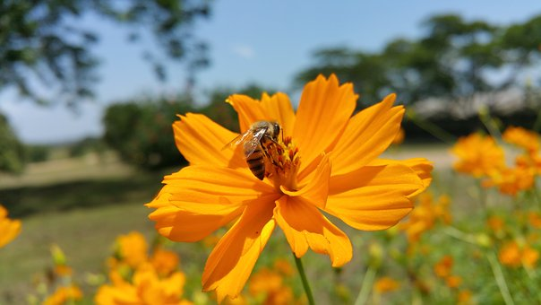 Bee, African Bee, Flower, Tree'S