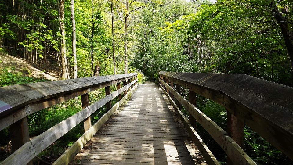 Sätt, Skog, Bro, Trädet, Central Park, Natur, Nature
