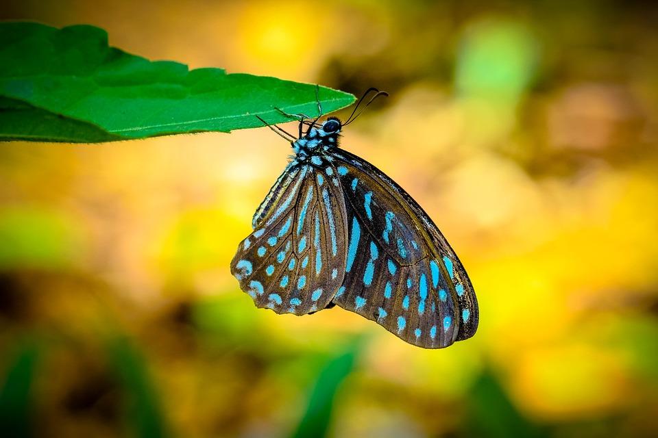 insects butterfly zebra polka dot