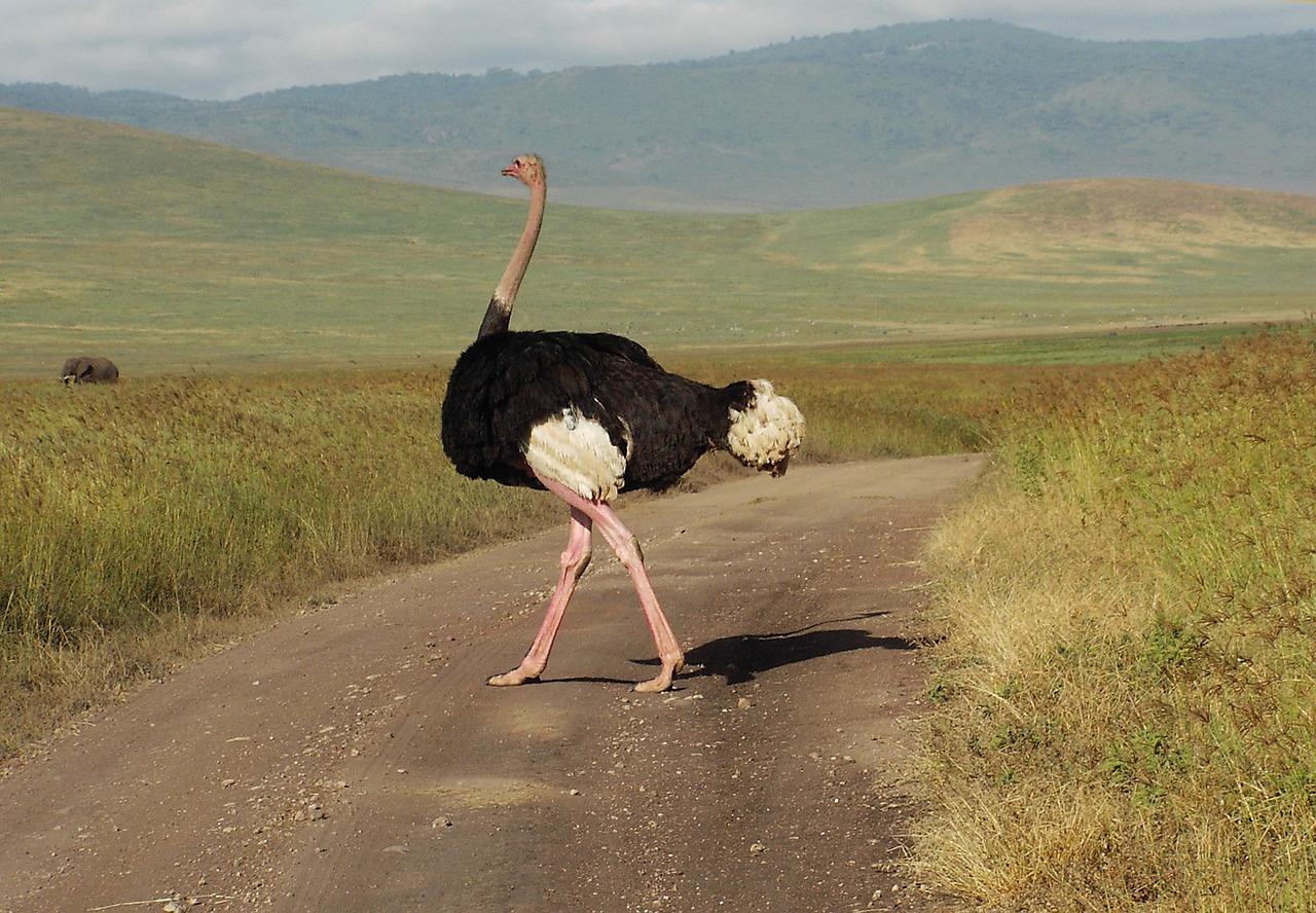 выбрала белоснежное страус с пылесосом картинка ли