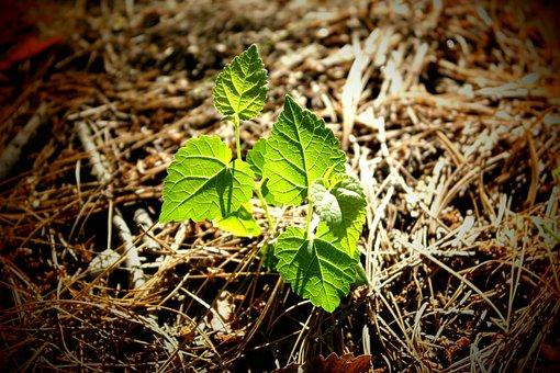 Life, Nature, Abstract, Plants, Bud