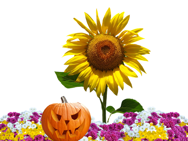 Autumn Asters Flowers Fall 183 Free Photo On Pixabay