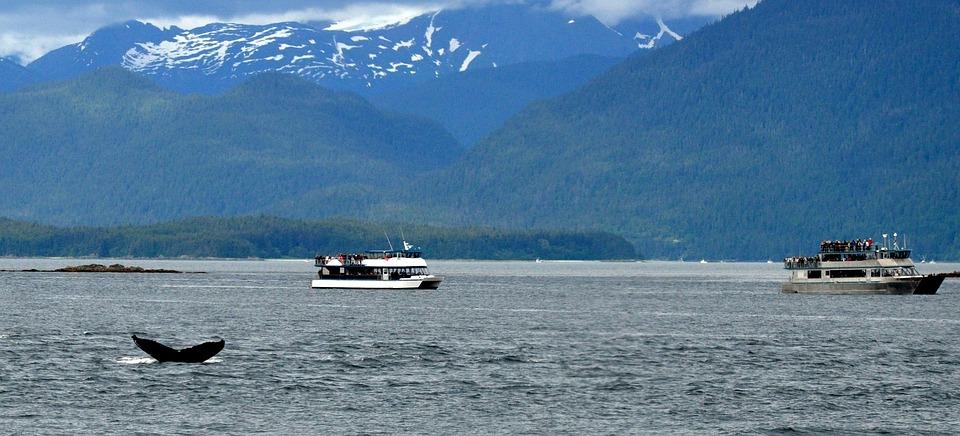 Alaska, Whales, Nature, Humpback, Breach, Breaching