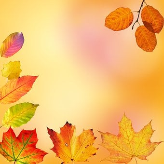 Autumn, Leaves, Colorful