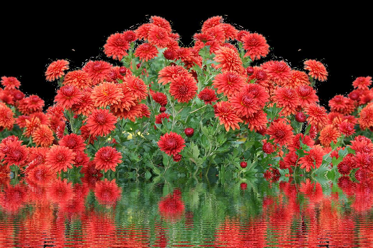 осенние цветы картинки гиф критикуют даже