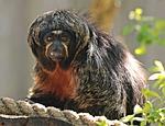 monkey, enclosure, animal world
