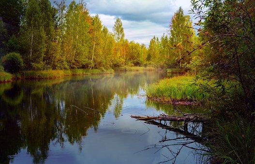 Na Podzim, Krajina, Rybník, Lesní Stromy