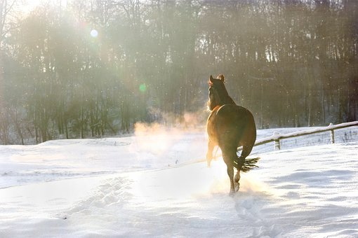 Winter, Snow, Christmas, December, Horse
