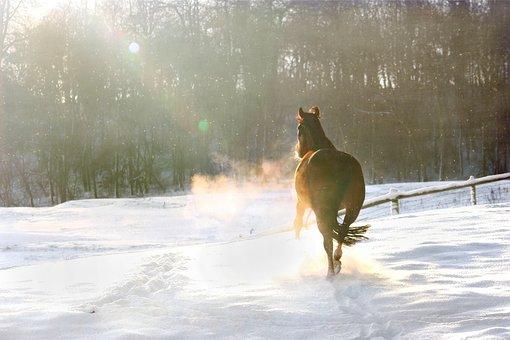 Winter, Snow, Christmas, December, Horse
