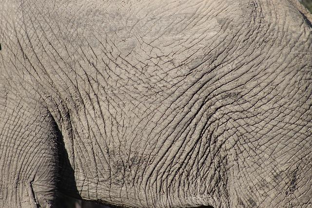 Elephant Skin Animal &...