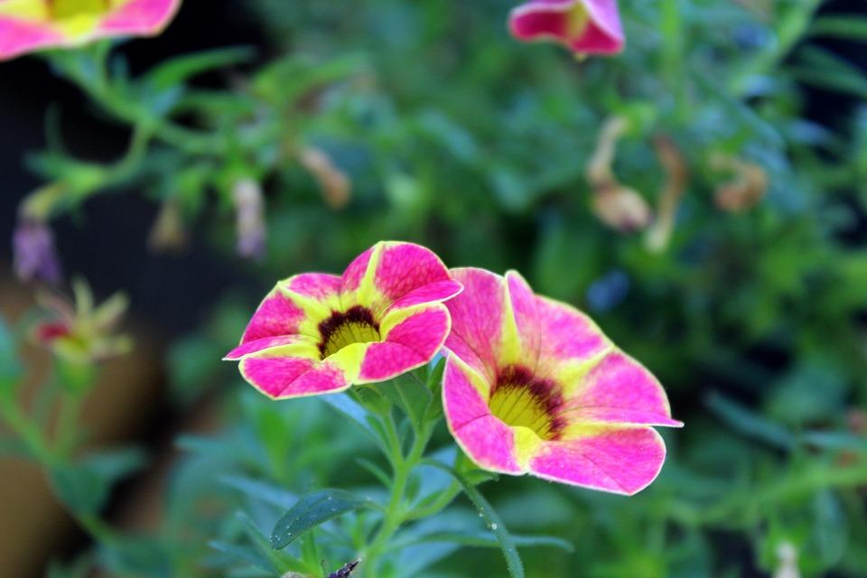 Blumen pflanzen  Kostenloses Foto: Blumen, Pflanzen, Garten, Natur - Kostenloses ...