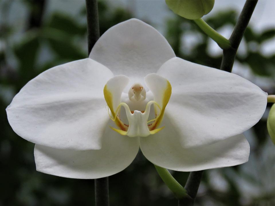 Orchidee Blanche Fleur Tropicale Photo Gratuite Sur Pixabay
