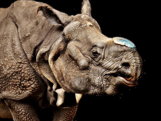 Rhino Animal World · Free photo on Pixabay