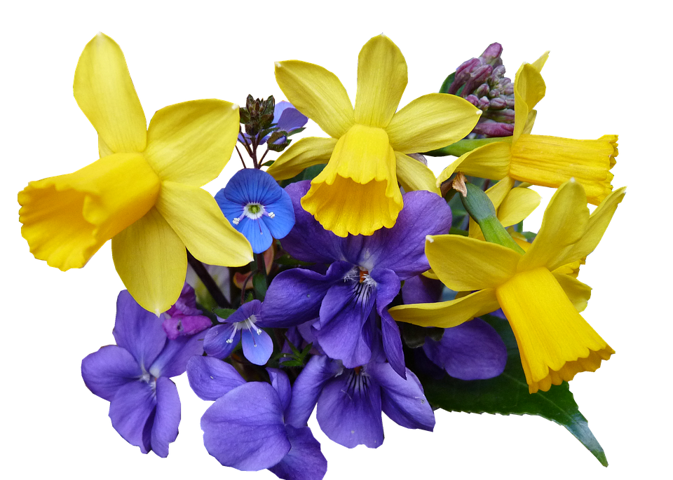 Spring flowers cut free photo on pixabay spring flowers cut out mightylinksfo