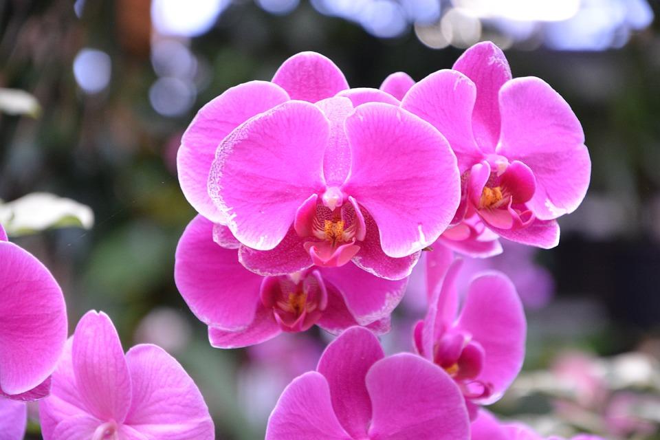 Bunga Anggrek Warna Pink Cerah Foto Gratis Di Pixabay