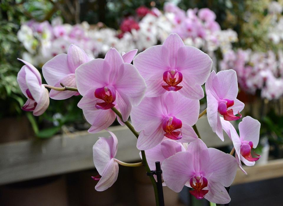 Blumen Orchideen Rosen Dekoration Kostenloses Foto Auf Pixabay