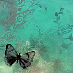 butterfly, background, red