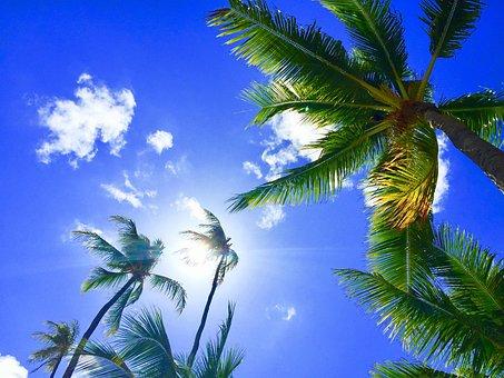 Hawaii, Aloha, Palmtree, Bluesky, Relax
