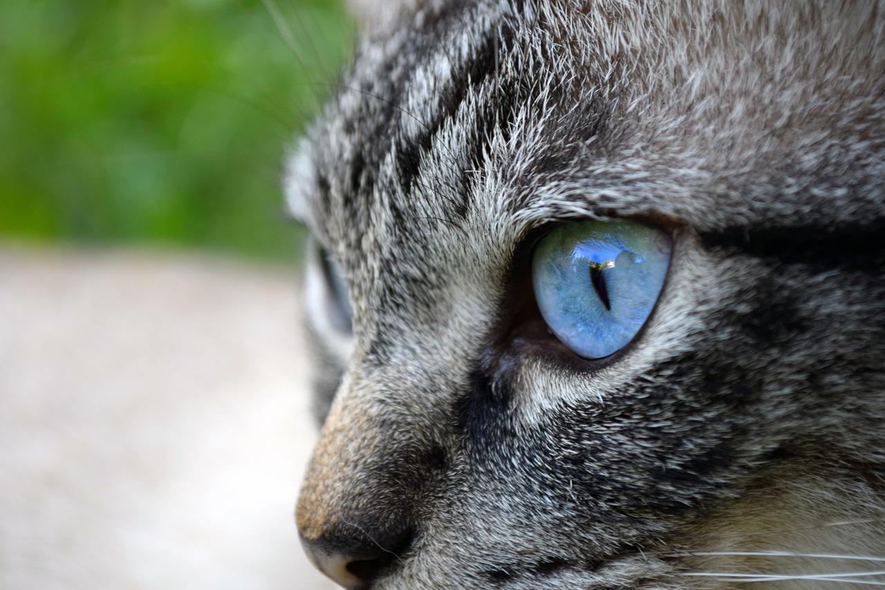 днем картинки кошачьего взгляда тропа вправо ведет
