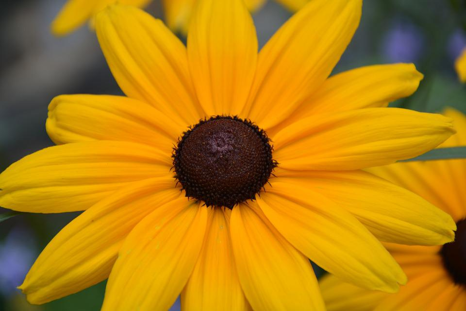 Flower yellow petals free photo on pixabay flower yellow flower petals yellow big flower mightylinksfo
