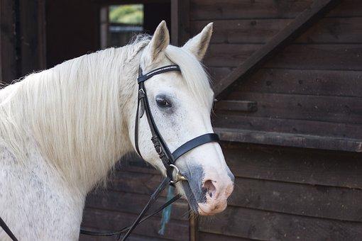 馬, 馬の, 馬術競技, 動物, 自然, 哺乳動物, ファーム, 仮面ライダー