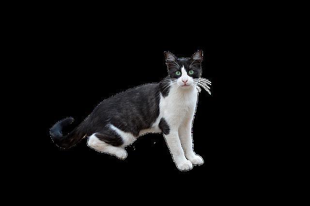 Png Cat Feline · Free Photo On Pixabay
