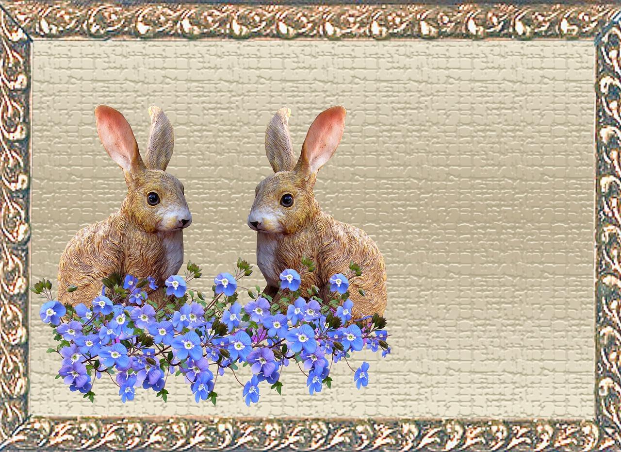 Смешные, видео открытка кролику