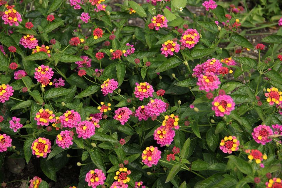 Fleurs Rose Jaune Photo Gratuite Sur Pixabay