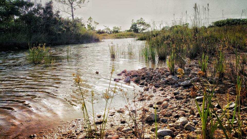 Belize, Potok, Zatoczka, Wody, Wsady, Trawa, Odbicie