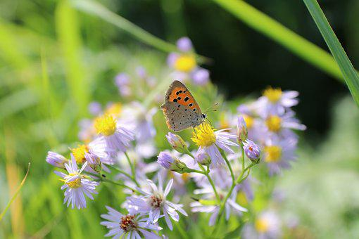 Butterfly, Flowers, Summer, Insects