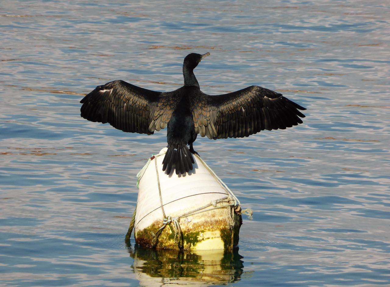 птицы байкала водоплавающие подкосов