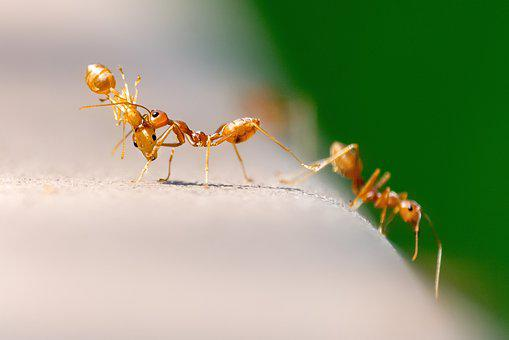 Ants, Nature, Insect, Macro, Small