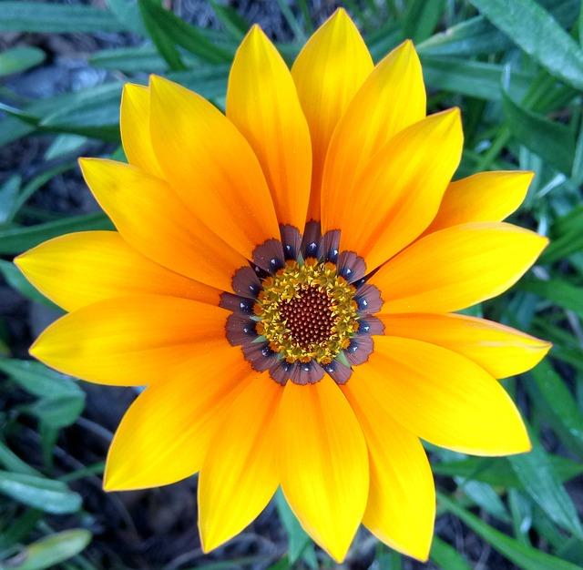 маникюр газания цветок картинки всех