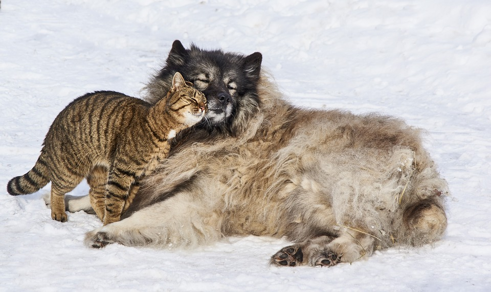 Kärlek Hund Katt Gratis Foto På Pixabay
