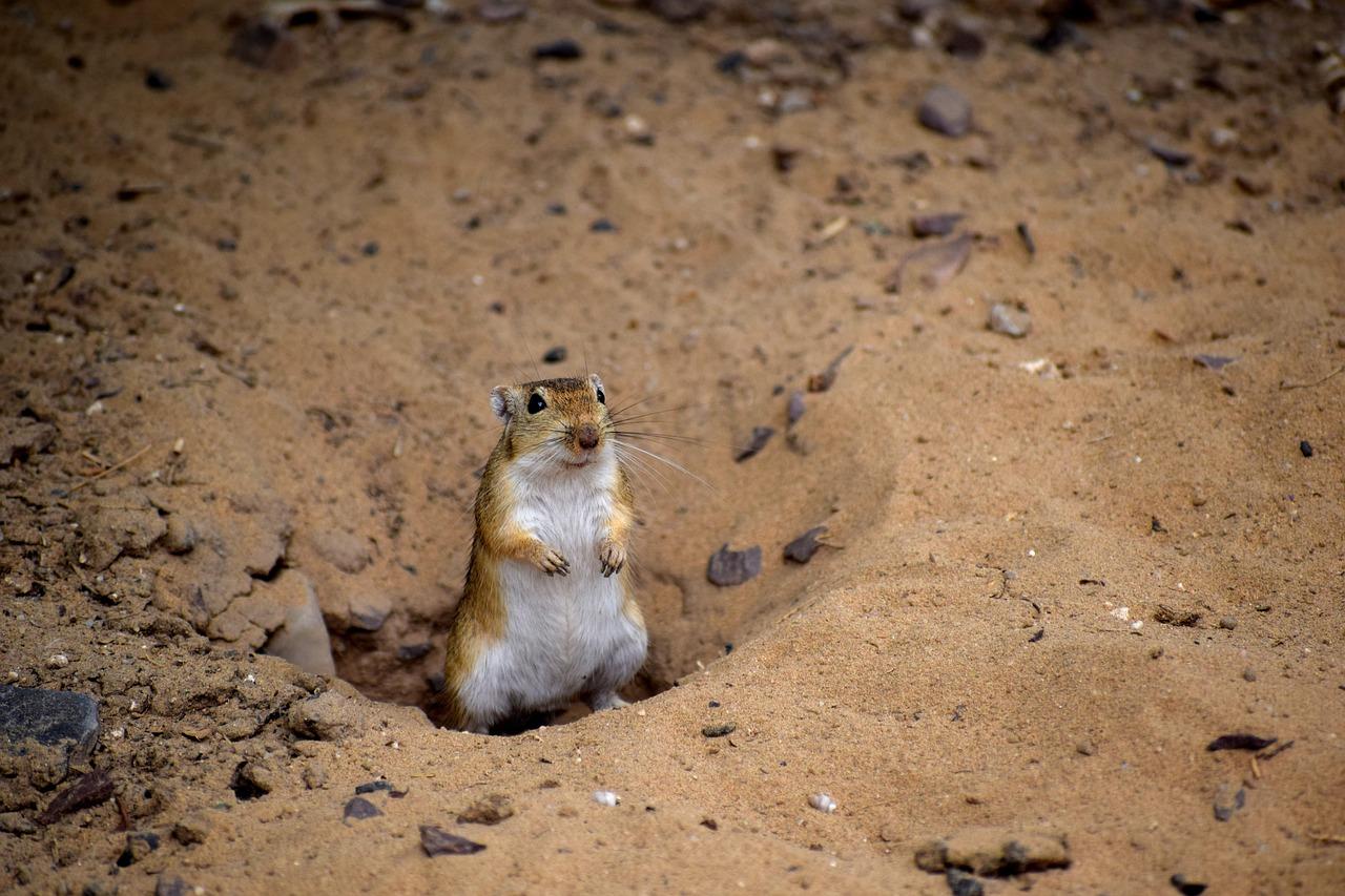 Пустыня в россии животные