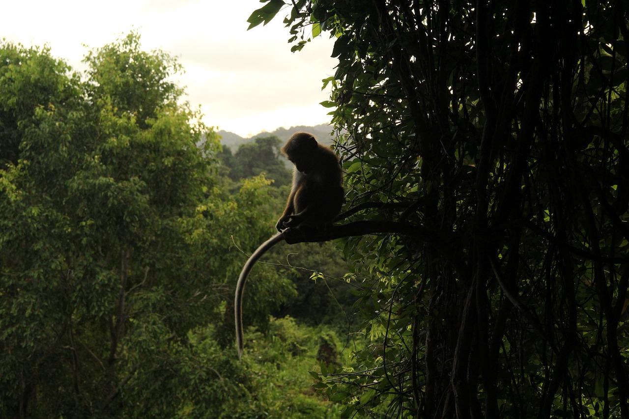 обезьянки в джунглях картинка фотографии говорят, что