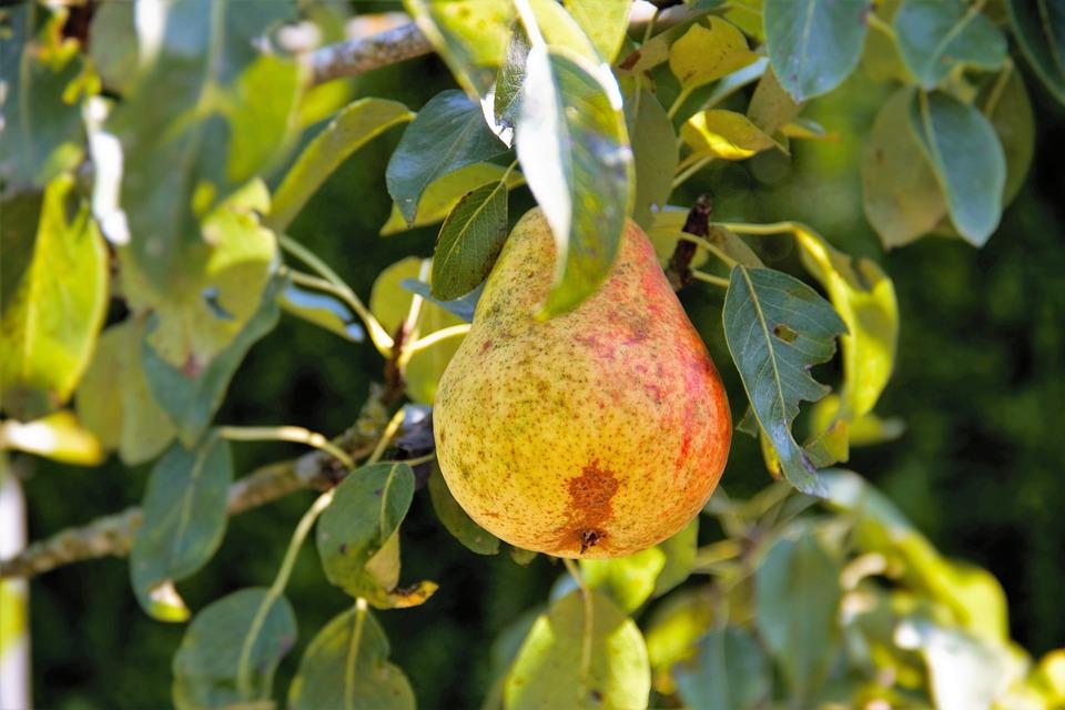 poda de frutales