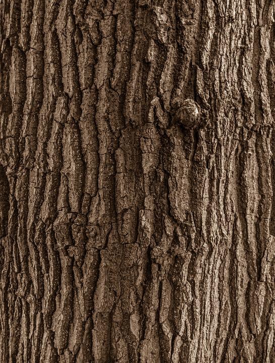 Texture Bois Nature