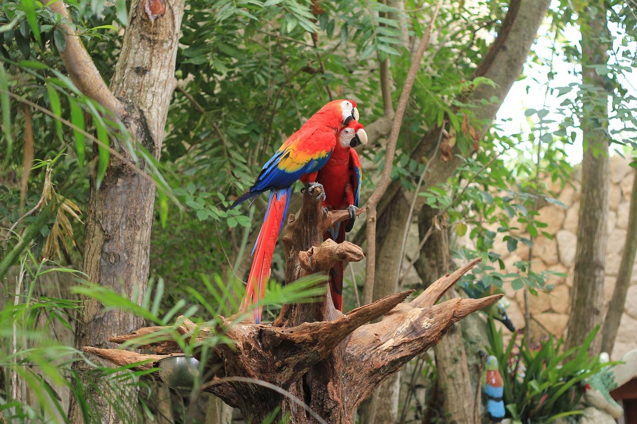 картинки попугаев джунглях всем без