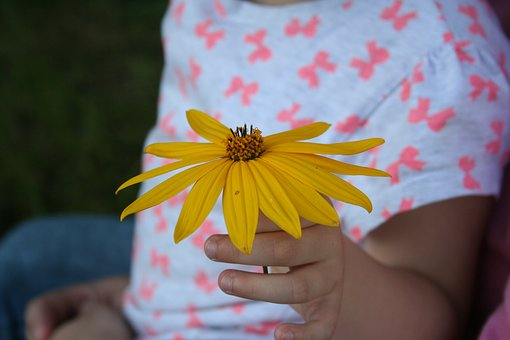 Criança, Flor, Dom, Mão De Criança