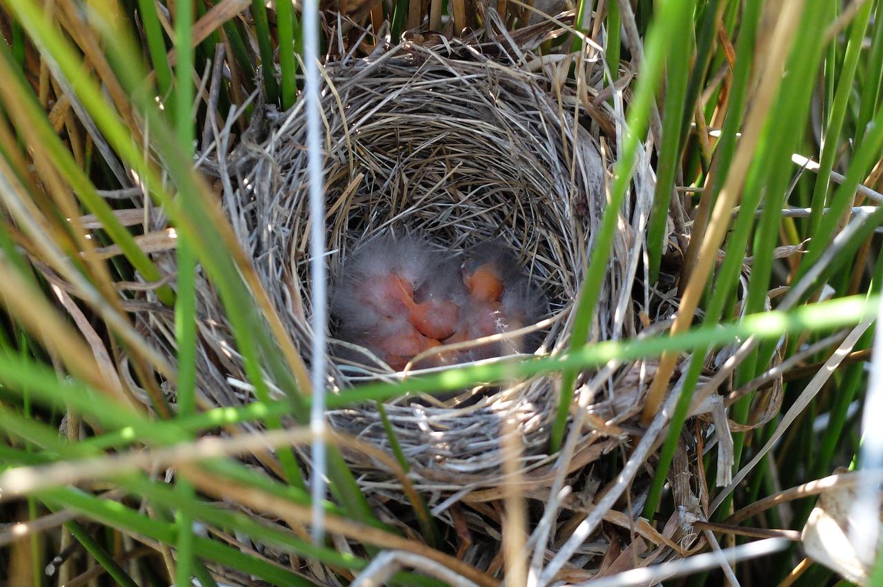 немного гнездо птиц фото зажимов позволяет осуществлять