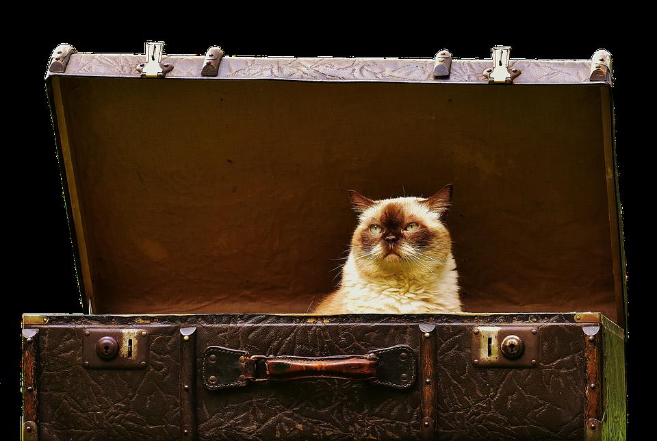 Matkalaukkujen, Antique, Brittiläinen, Kissa, Söpö