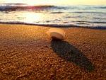shell, sand, sunset
