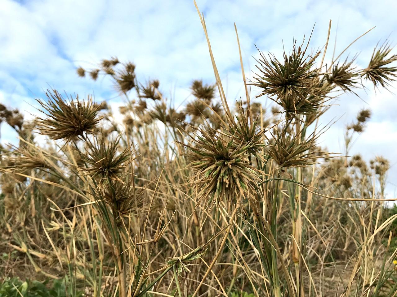 прибрежная трава картинки дела идут жилу