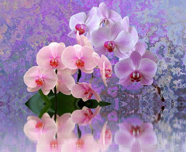 Свадьба, открытка орхидеи фото